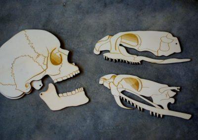 Cistude Nature – Serpents/Squelette